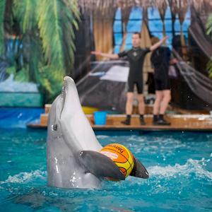 Дельфинарии, океанариумы Анапы
