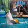 Дельфинарии, океанариумы в Анапе