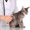 Ветеринарные клиники в Анапе